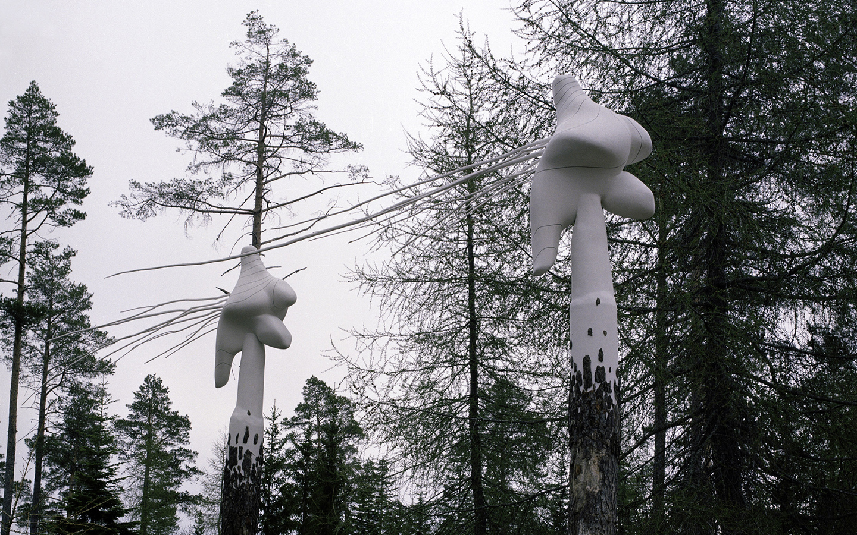 Pinus_Silvetris_Tore_Reisch_Bymarka